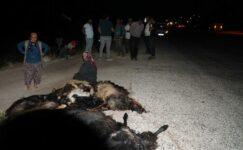 Otomobilin keçi sürüsüne daldığı kazada 22 keçi öldü