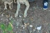 Hortumla bağladığı köpeğe tecavüz zanlısı serbest