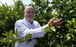 Limonda ihracat kısıtlamasının kalkması, üreticiyi sevindirdi