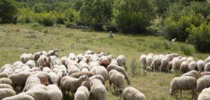 Tescilli Balıkesir kuzu etine, güvenli gıda takip sistemi