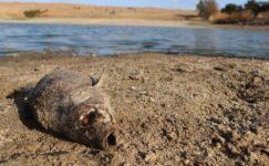 Balık ölümlerini önlemek için kuruyan gölete su verdiler