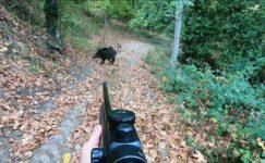 Bilecik'te ceviz toplayan kadına domuz saldırdı