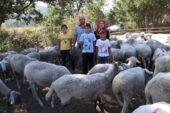 Her gün 90 koyunu elleriyle sağan çift, ayda 15 bin TL kazanıyor