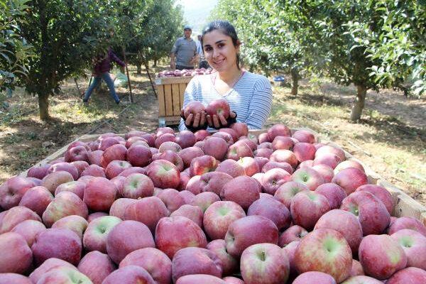 Isparta'da elma hasadı; bu yıl rekolte beklentisi 850 bin ton
