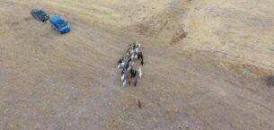 Jandarma, köylünün kaybolan 43 küçükbaş hayvanını dron ile buldu
