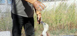 'Mevsime göre merkeze gelen hasta hayvan türü değişiyor'