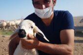 'Genç Çiftçi' projesi sayesinde 160 koyunluk sürüsü oldu