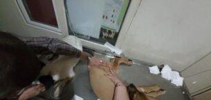 Çanakkale'de 16 köpeğin zehirlenerek öldürülmesinde 2 zanlı yakalandı