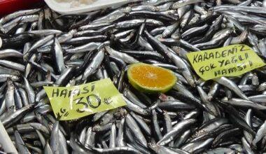 Çanakkaleli balıkçılar: Hamsinin bollaşması ve ucuzlaması havaların soğumasına bağlı