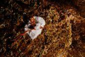 Marmara Denizi'nde 27-30 metrelerde büyük mercan ekimi