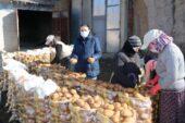 Patatesler doğal soğuk hava deposu mağaralarda saklanıyor