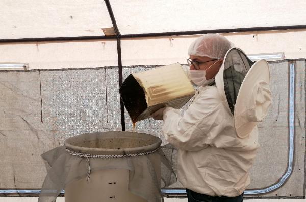 Toroslar'da kış şartlarında bal sağımı