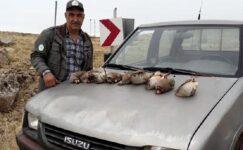 Tunceli'de kınalı keklik avlayan 5 kişiye 15 bin 500 TL ceza