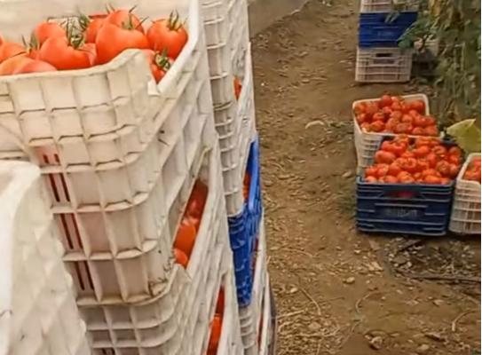 Çiftçinin videolu isyanı