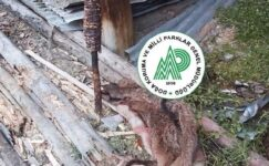 Avladıkları yaban keçisinidöner yapıp yerken yakalanan kaçak avcılara 33 bin TL ceza