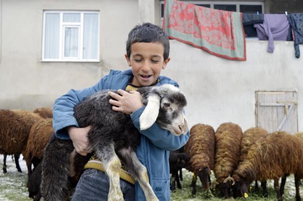 Ağrı'da, '5 yılda 750 bin koyun projesi' meyvelerini vermeye başladı