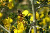 Yalancı baharın ardından gelen kış şartları arıcıları vurdu
