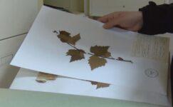 Türkiye'nin bitki kütüphanesi… 37 bin bitki örneği var