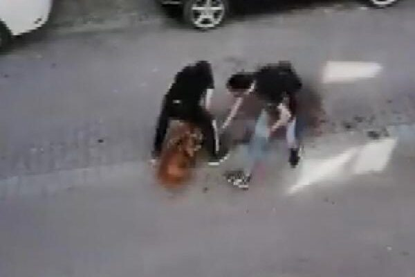 Avcılar'da pitbull'un kediyi öldürdüğü dehşet anları kamerada