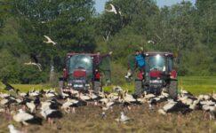 'Avrupa Leylek Köyü'ndeki çiftçiler göç nedeniyle tarla sürme işlemini yavaşlattı