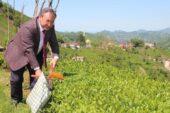 Çaykur Genel Müdürü Alim: İşçi olmayınca üreticiler ailece hasada başladı
