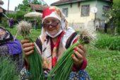 Çiftçi kadınlar sebze fidelerini toplamaya başladı