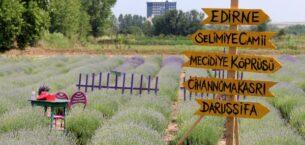 Edirne'de 'Lavanta Tarla Günleri' ile mor bahçeler şenlendi