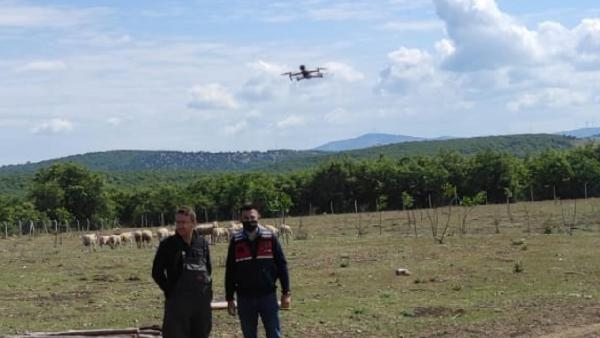 Jandarma kaybolan koyunları dronla buldu