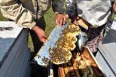Karaçalı balı için Bulgaristan sınırındaki meralara çıktılar