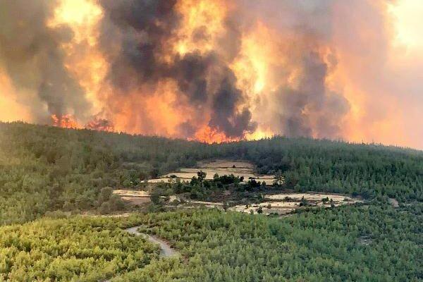 İBB, orman yangınlarından etkilenen hayvanlara veteriner gönderiyor
