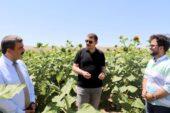 İtalya'da yaşayan Sivaslı tenordan ayçiçeği tarlasında arya