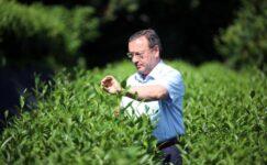 Kilosu 4 bin TL'ye satılan beyaz çay, pandemide tükendi