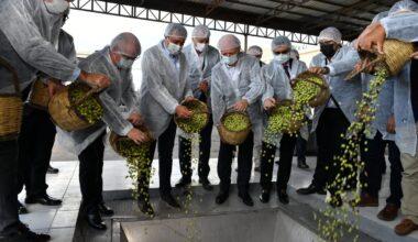 Balıkesir'de Yılın İlk Zeytinyağı Sıkımı Gerçekleştirildi