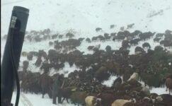 Ardahan'da kar nedeniyle yaylada mahsur kalan çoban ve sürüler kurtarıldı