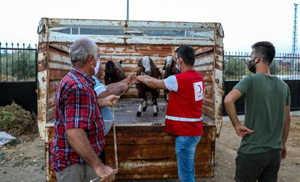 Kızılay'dna Manavgat'a küçükbaş hayvan yardımı