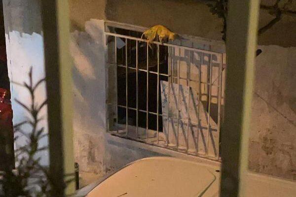 Şişli'de tedirgin eden görüntü; ölü kediyi boyayıp pencereye astı