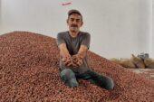 TMO duyurdu: Fındık üreticilerine ödemeler bugün
