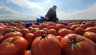 Çanakkale domatesi son turfanda hasadında üreticiyi güldürdü