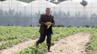 Manavgat'ta 20 dakika yağan doluda ürünler zarar gördü